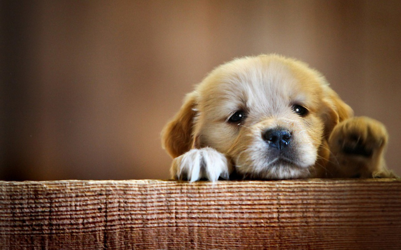 Perchè Puppy School?