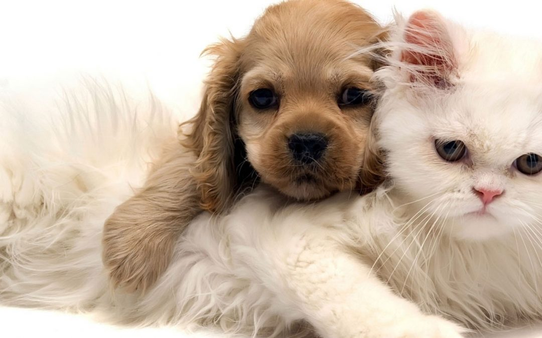 Medicina Preventiva nel Cane e nel Gatto