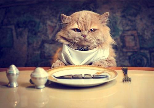 obesità-gatto