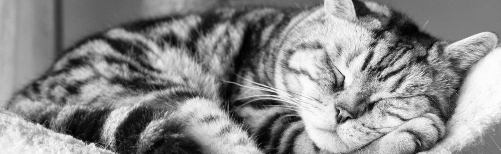 Anestesia Cani e Gatti Anziani