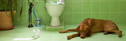 Incontinenza urinaria cane anziano integratore