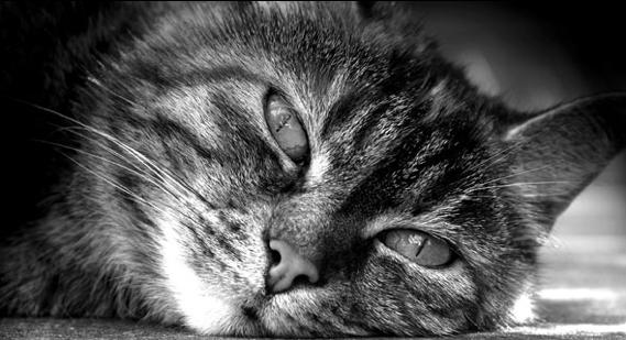 ipertiroidismo-gatto