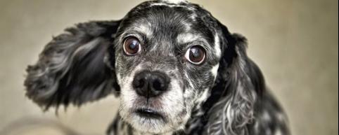 sordità-cane