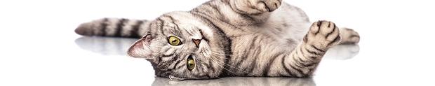artrosi-del-gatto