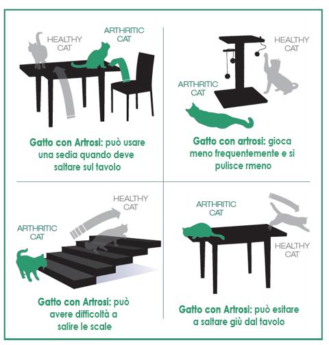 Artrosi nel Gatto
