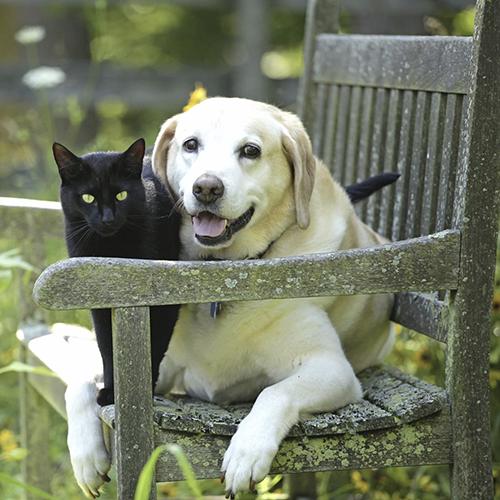 Insufficienza renale cronica nel cane e gatto anziani