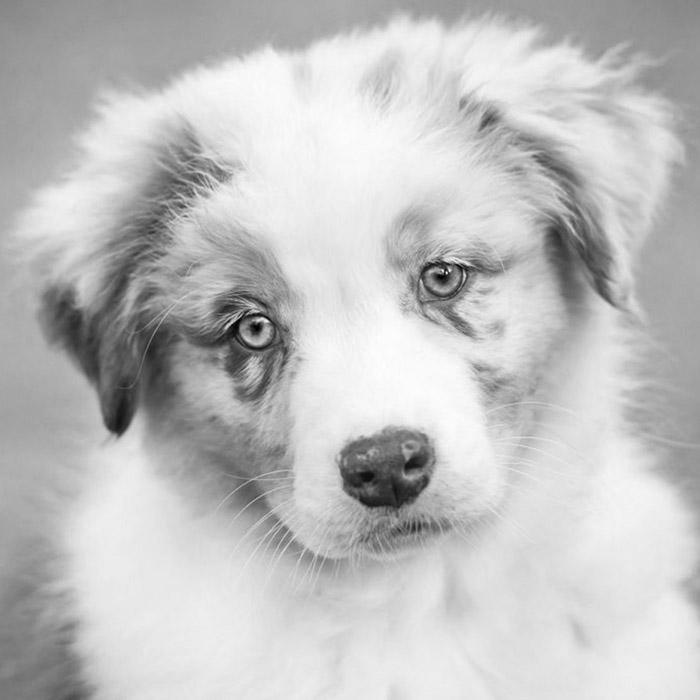 Campagna sterilizzazioni clinica veterinaria borgarello for Prestazione di servizi extra ue