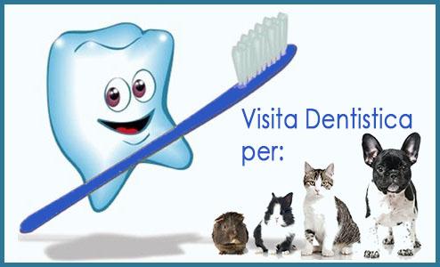 Visita Dentistica Cane Gatto